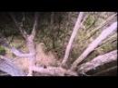 Лесной змей - ужасы - русский фильм смотреть онлайн 2014