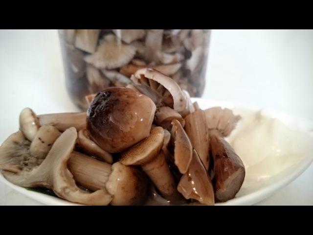 МАРИНОВАННЫЕ ОПЯТА на зиму ВОЛШЕБНАЯ засолка и консервация грибов