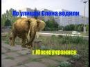 По улицам слона водили г. Южноукраинск 2003год