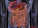Очищение кишечника. Висцеральная терапия. Александр Огулов