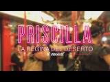 PRISCILLA MUSICAL Italian Cast singing
