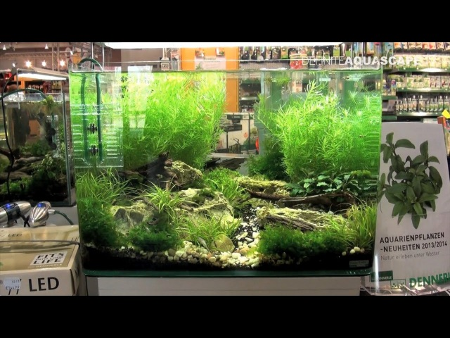 Planted aquariums of Heimtiermesse 2015, Hannover - part 8