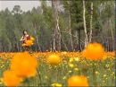 Заволокины Ветка сирени — Видео@Mail Ru