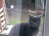 Кот говорит, Саня, открой