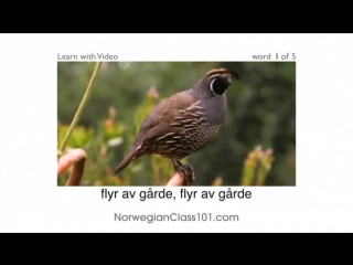 Norsk med video - Birds of a Feather Flock