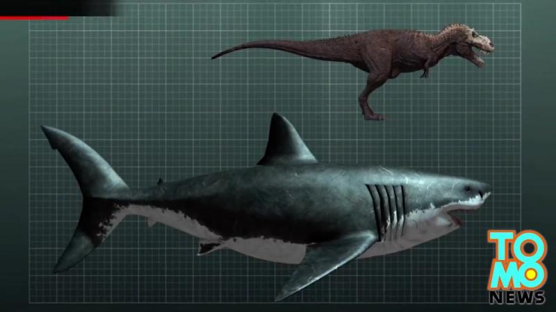 Гигантскую большую белую акулу сожрал загадочный монстр. дикий мир и поведение животных в нем. » Freewka.com - Смотреть онлайн в хорощем качестве