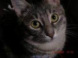 Шок кошки. Шок кошки Матрёшки в начале летних каникул.