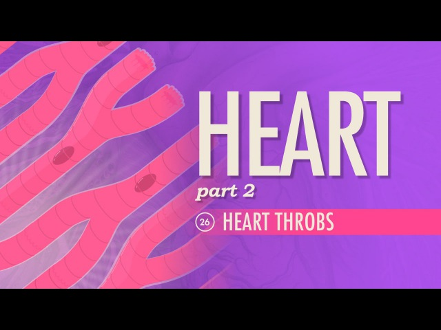 The Heart, part 2 - Heart Throbs: Crash Course AP 26