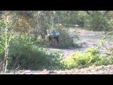 Кхаджурахо, нац. парк, антилопа