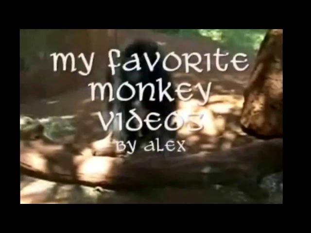 Супер приколы про обезьян. Смотреть ВСЕМ!