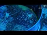 Animal Planet. Аквариумный бизнес (7 сезон: 3 серия из 12)