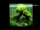 Aquascaping - The Art of the Planted Aquarium 2012 Nano compilation