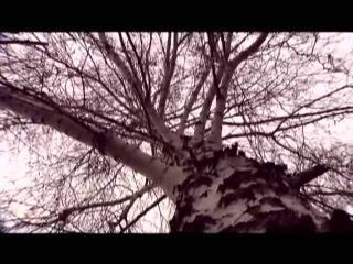 Двойная слава Ильи Муромца - В поисках истины