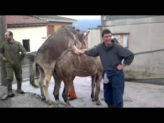 Осел трахнул лошадь! Жесть угар разврат порево секс молоденькая домашнее русские порево застукала муж геи порно лисбиянка
