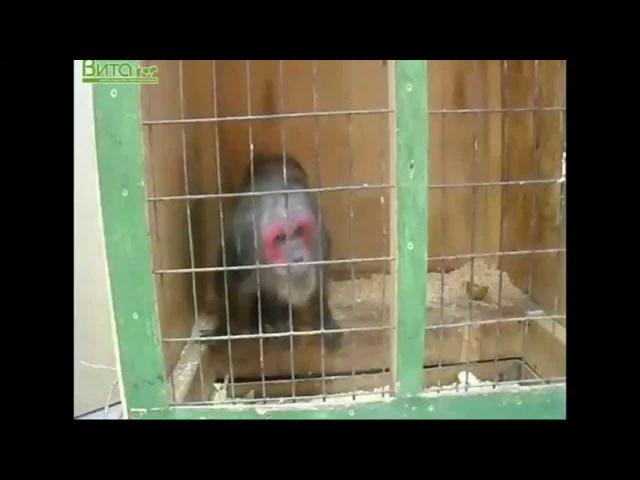 Контактный зоопарк воспитание садизма у детей 2