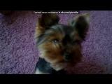 «патрик» под музыку Песня - Пропала собака по кличке Дружок. Picrolla