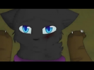 Я не сплю я живой - Коты Воители