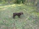 Пошли в лес за грибами и встретили собачку измазанную какашками! АХАХАХА! Охотники блин.
