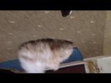 Кошка и валерьянка