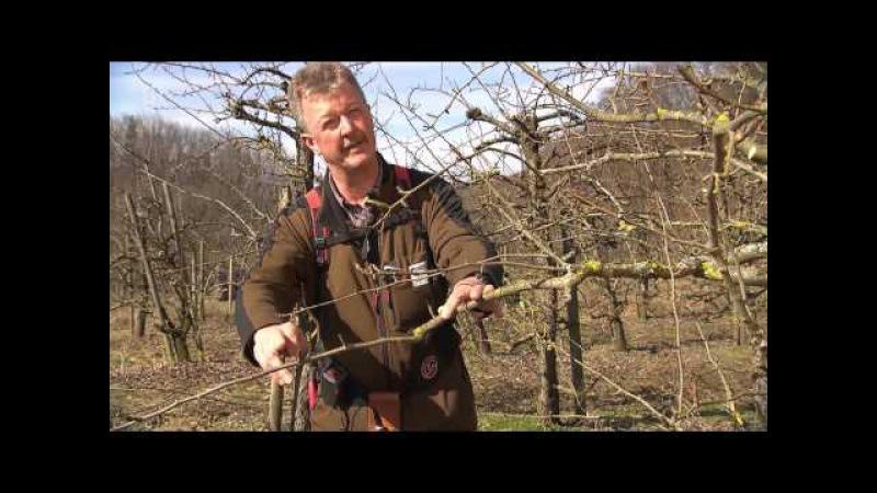 Gewusst wie: Obstbäume richtig schneiden   Unser Land   BR - Bayerisches Fernsehen