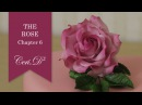 The Rose 6 | Rose Petals 17-22