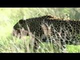 Дикие животные для детей. Развивающая презентация (видео нарезки) (1)