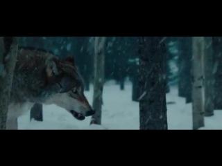 Эволюция борна / The Bourne Legacy [720p]