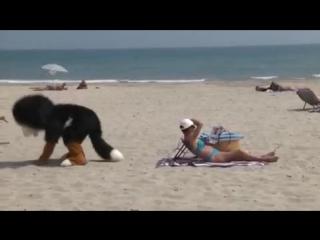 Бешеный пёс на пляже. 2015