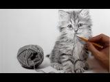 Рисунок кота карандашом - ускоренное видео.