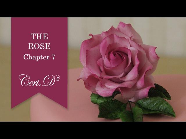 The Rose 7 | Rose Calyx