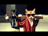 приколы про кошек, котов видео нарезка,СМОТРИ