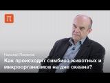 Оазисы жизни в океане  Николай Пименов