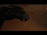 Секретные материалы/The X-Files (2015 - ...) Промо-ролик (сезон 1)