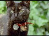 Кошки BBC