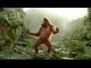 Funny Ape Song. Cartoon Parody. Dance Music Pop Songs. Dancing Gorilla Kids Cartoons movies 2015
