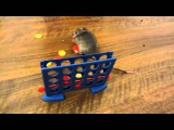 Прикольные дрессированные мышки