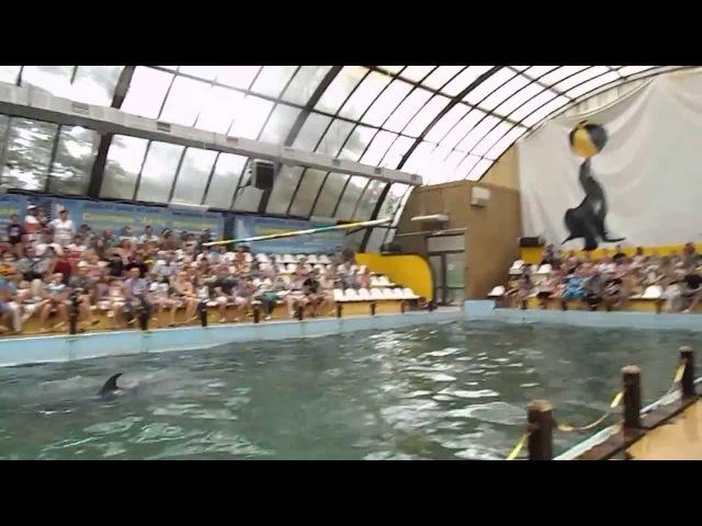 Ростовский дельфинарий Часть 1