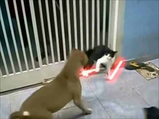 The Cat Unleashed