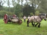 Petra - the strongest Belgian Draft Horse