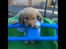 """Собака - друг человека ツ on Instagram: """"🎥 Щенок на качелях😍 ➖➖➖➖➖➖➖➖➖➖➖➖ 💓 Ставим лайки 💬 Комментируем 👥 Отмечаем под видео друзей ✅ Подписываемся на @d0g_lovers"""""""
