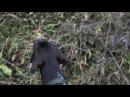 Охота с легавой. Часть 2 Первоклашка.