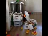 Самое смешное видео с попугаем ! ржака!