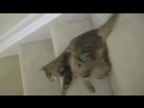 Жидкий кот стекает по ступенькам