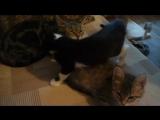 Маша очень заботливая мама, а Акси и Санчес очень выросли