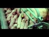 Без слов: 6-минутное видео из фильма «Самсара», которое лишит вас дара речи!