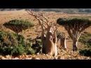 Остров Сокотра Йемен -одно из самых удивительных мест на Земле