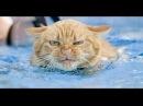 Как мыть кота. Кот убегает из ванны! How to wash a cat