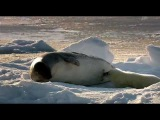 Wild Russia - 2 - Arctic Россия От Края До Края - Арктика - 1/3