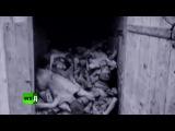 Российско-китайский конкурс военных фильмов. Мифы о войне