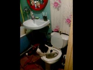 Мой кот Боня- Бонифаций ничем не отличается от людей, сам так решил.